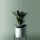 Terratinta — Hexa Wild Sage